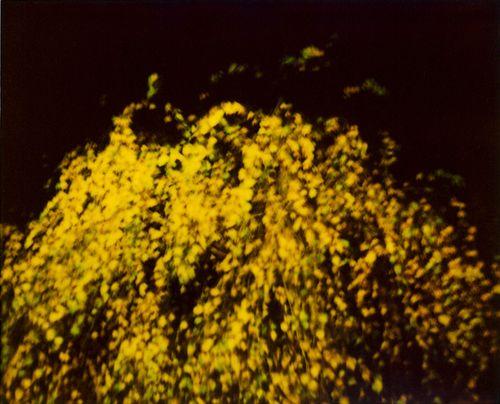 Polalituptree